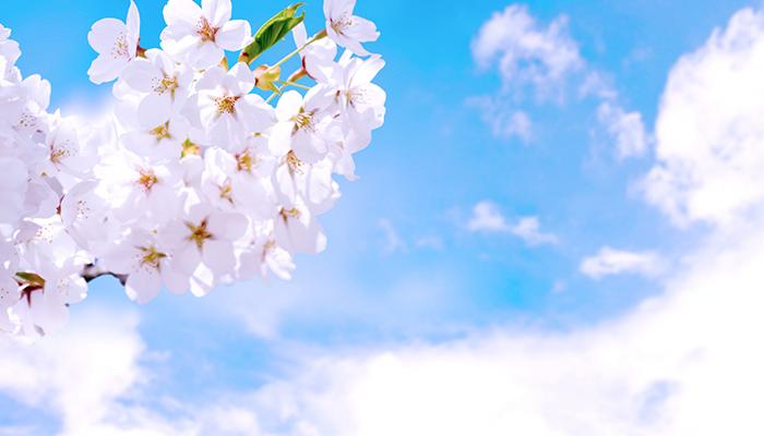 明るい春を過ごしましょう!